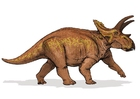 Image anchiceratops