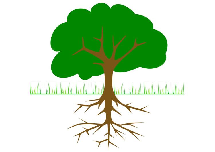Arbre Avec Racine image arbre avec racines - dessin 20764