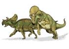 Image avaceratops