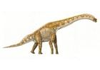 Image brachiosaure