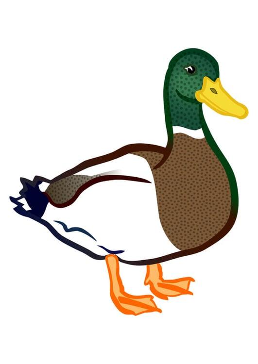 image canard dessin 29620 duck clip art free duck clipart crafts