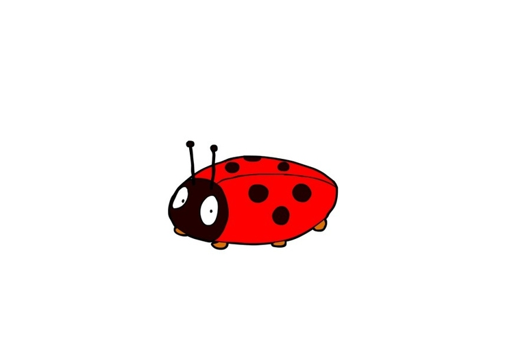 Image coccinelle
