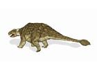 Image dinosaure - ankylosaurus 2
