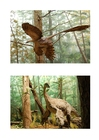 Image dinosaures à plumes