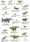 Image dinosaures (basal ceratopsia)