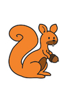 Image écureuil