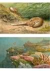 Image faune maritime