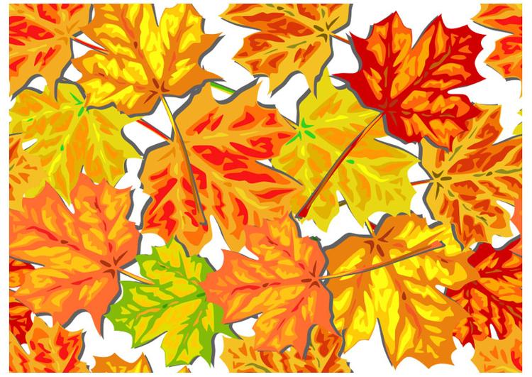 Image feuilles d 39 automne dessin 20556 - Image feuille automne ...