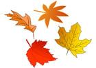 Image feuilles d'automne