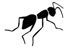 Coloriage fourmi