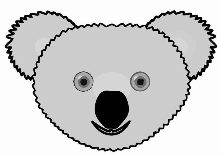image koala  dessin 19478
