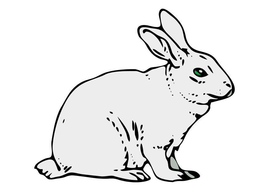 image le lapin  images gratuites à imprimer  dessin 10201