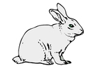 Images le lapin