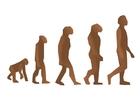Image l'évolution des humains
