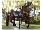 Photo manège de chevaux