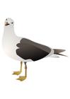Image oiseau - mouette