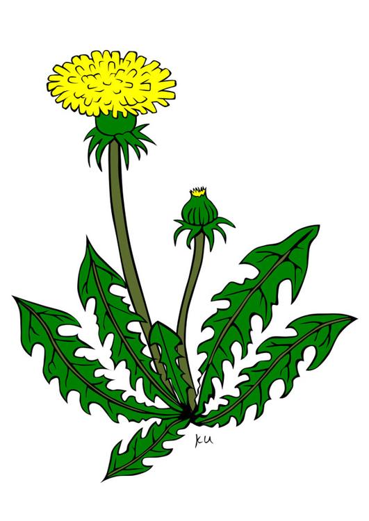 Image pissenlit dessin 21750 - Dessin fleur pissenlit ...