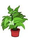 Image plante d'intérieur