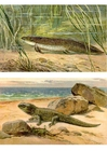 Image premiers animaux terrestres