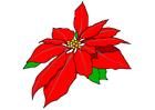 Image rose de Noël