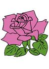 Image rose