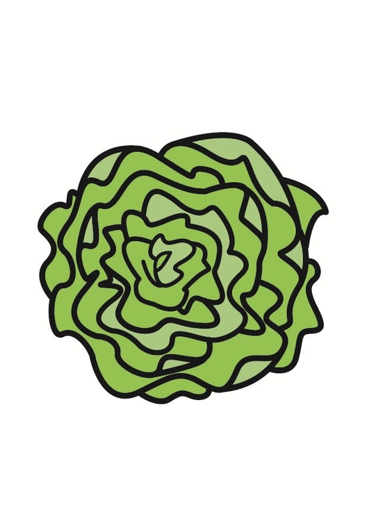 Image Salade Dessin 23234