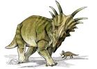 Image styracosaure