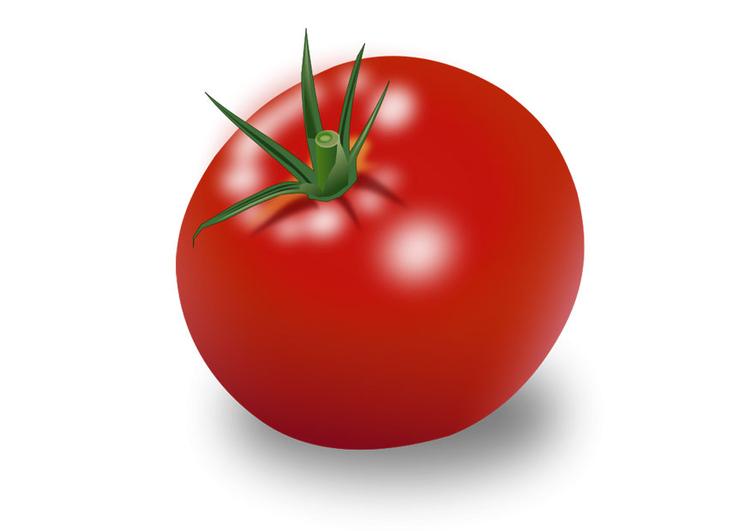 Image Tomate Dessin 28304