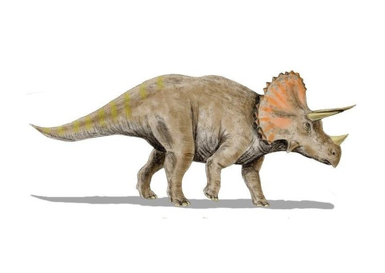 Image triceratops