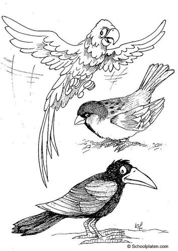 Dessin corbeau - Coloriage corbeau ...