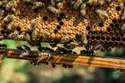 Photo abeilles