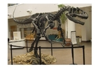 Photo allosaurus