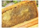 Photo alvéole avec du miel