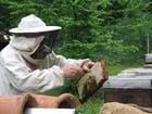 Photo apiculteur