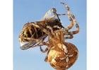 Photo araignée ayant attrapé une guêpe