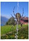 Photo araignée dans la toile