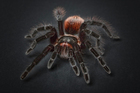 Photo araignée