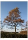 Photo automne - arbres