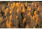 Photo automne dans le bois