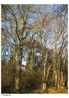 Photo automne dans un bois