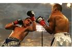 Photo boxer