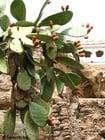 Photo cactus