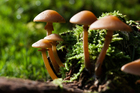 Photo champignons
