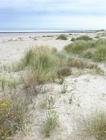 Photo dunes