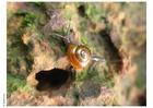 Photo escargot