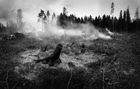 Photo feu de forêt