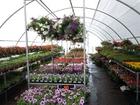 Photo fleurs et plantes