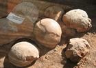 Photo fossiles, oeux de dinosaure