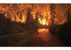 Photo incendie de forêt