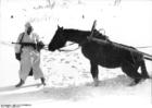 Photo La Russie - soldat avec cheval en hiver